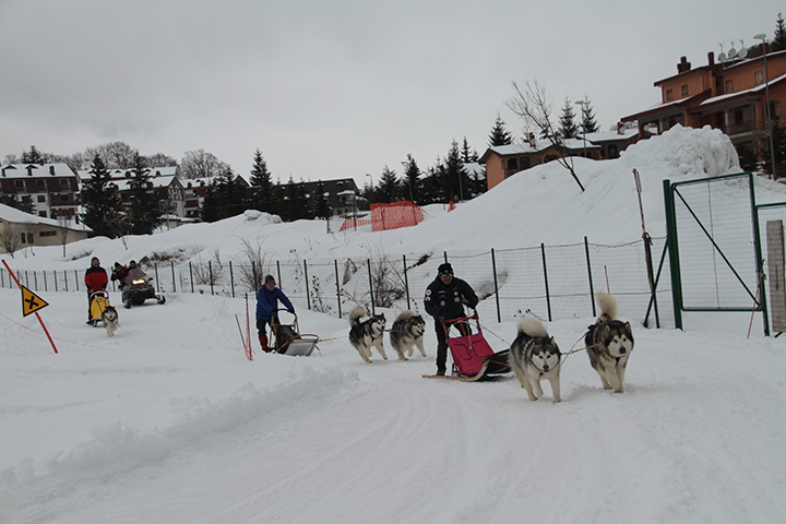 il primi alaskan malamute winter camp